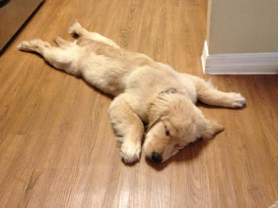 http://4.bp.blogspot.com/-8zolwfP5SpY/UE4jAMpz2MI/AAAAAAAAVDo/3DDYWbzcW_c/s1600/cute-sleeping-puppies-011.jpg